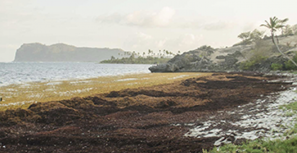 Exposure to emissions from Sargassum seaweed washed up on the shore